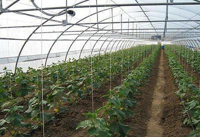 Полив в сельском хозяйстве