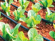Точечный полив растений