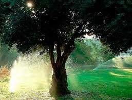 Автополив растений и деревьев